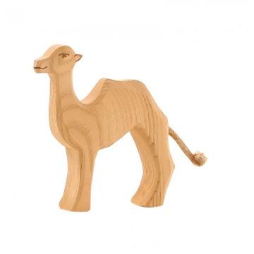 Petit chameau