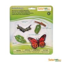 Cycle du papillon monarque