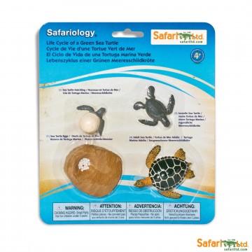 Cycle de la tortue de mer