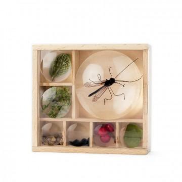 Boîte à specimens
