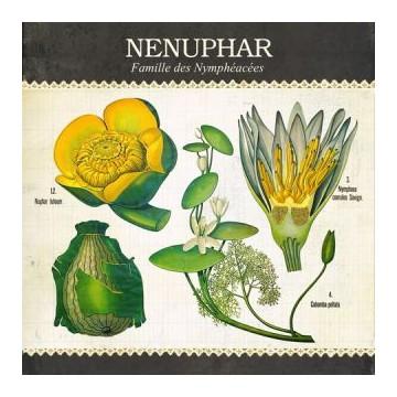 """Carte """"Nenuphar"""""""