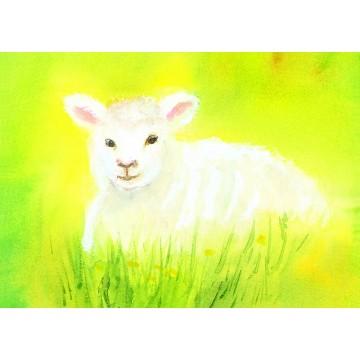"Carte ""agneau blanc"""
