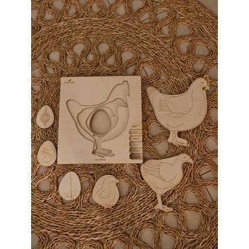 """Puzzle """"Cycle de vie de la poule"""""""
