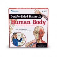 Aimants corps humain à double face