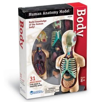 Modèle du corps humain à monter et démonter