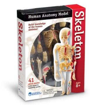 Modèle de squelette à monter et démonter
