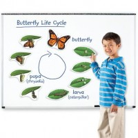 Aimants cycle de vie du papillon