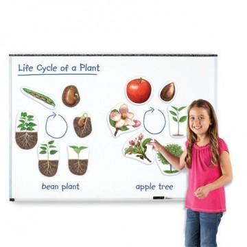 Aimants cycles de vie du haricot et du pommier