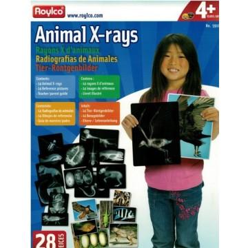 14 radios d'animaux