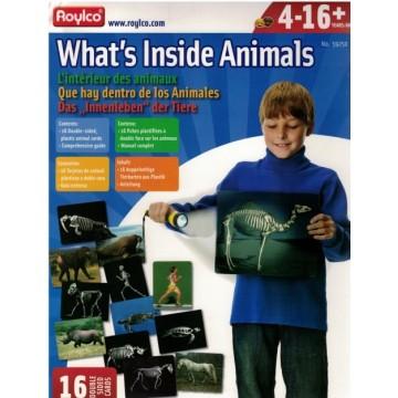 A l'intérieur des animaux-16 radios