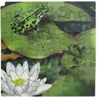 Puzzle cycle de vie de la grenouille