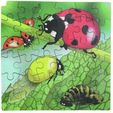 Puzzle cycle de vie de la coccinelle