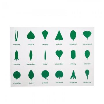 Tableau de contrôle pour cabinet de botanique