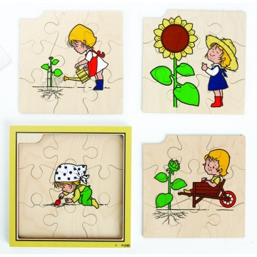 Puzzle cycle de vie du tournesol