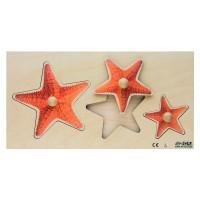 Encastrements grand-petit : étoile de mer