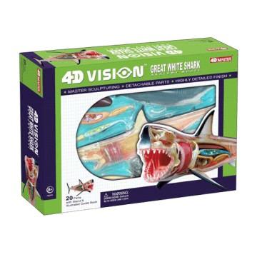 Anatomie 4D : requin