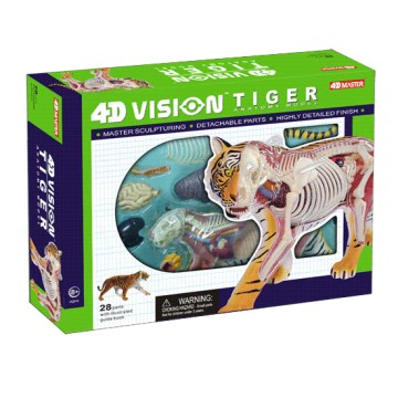 Anatomie 4D : tigre