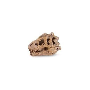 Crânes de dinosaures